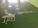 Dinozaury - nietypowa lekcja w klasach pierwszych_14